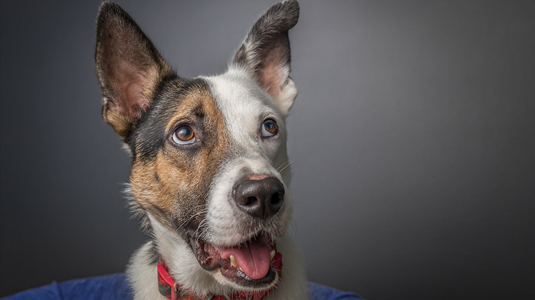 Dog Photographer Hunter Valley