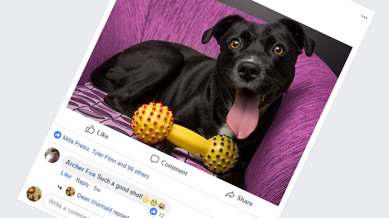 Share photos of your dog online