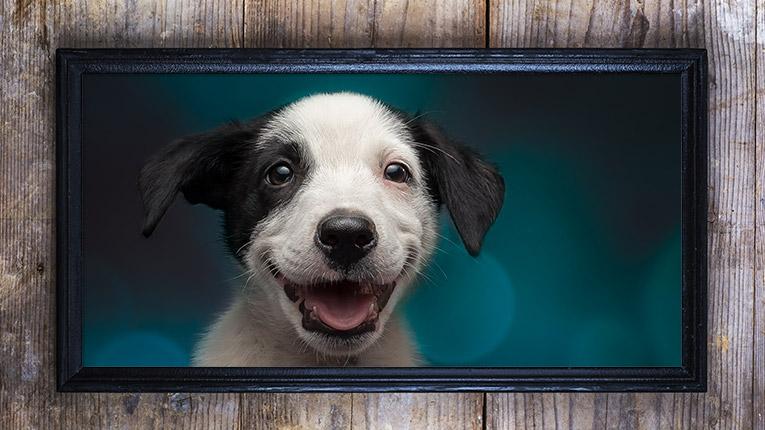 Print large photos of your dog