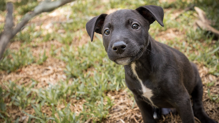 Puppy photography in the Hunter Valley NSW