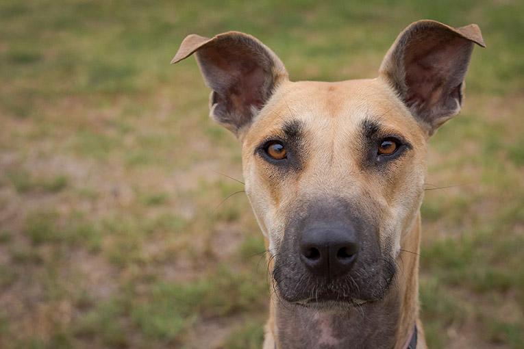 Luna, Greyhound X