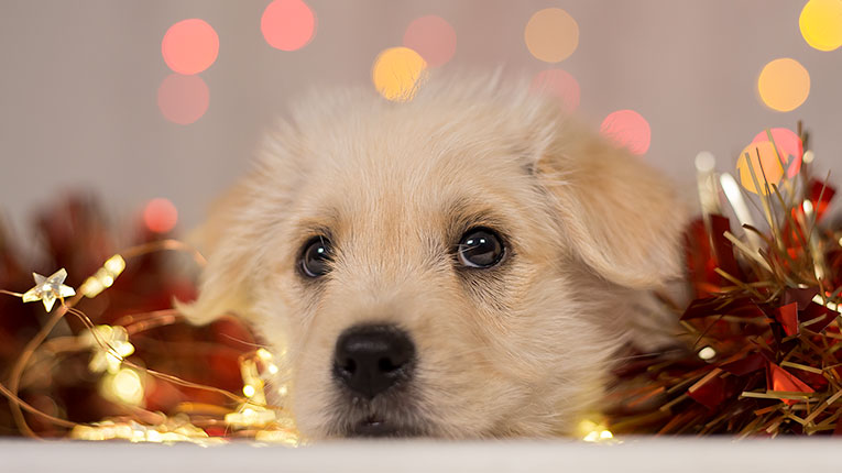 Puppy Photographer in Newcastle