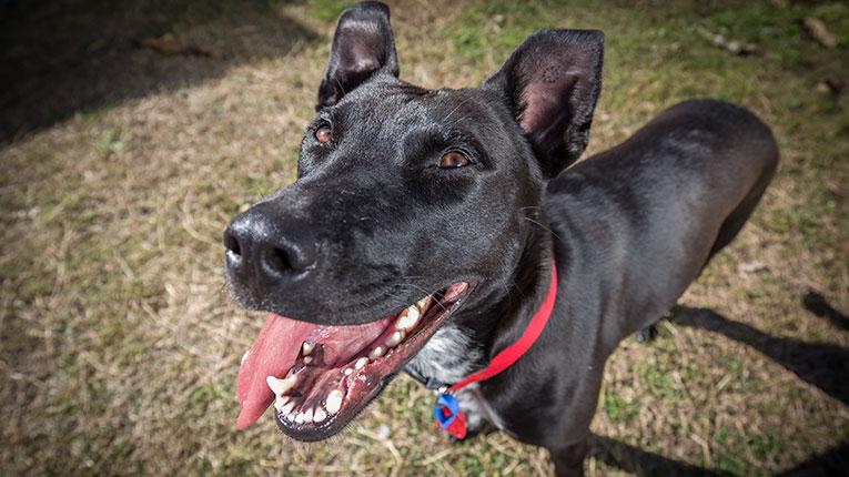 Dog Photography in Newcastle NSW Australia